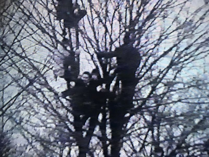 Fans in trees during FA Cup 3rd Round vs. Manchester Untied (1969)
